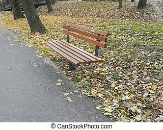 Bench in autumn park. Autumn landscape.