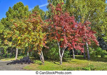 Bench in autumn park under multicilored foliage of rowan trees.