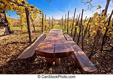 Bench in idyllic autumn vineyards trellis