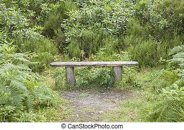 Bench in Killarney National Park