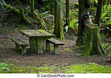Bench in Mossy Forest