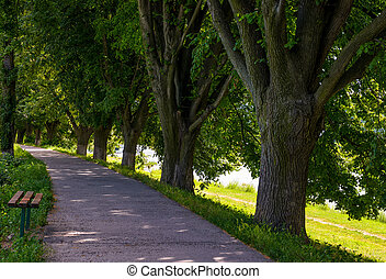 bench in shade of linden trees. Uzh river embankment in...