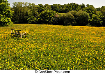 Bench in the buttercups