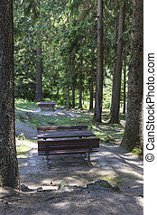 bench in the wood