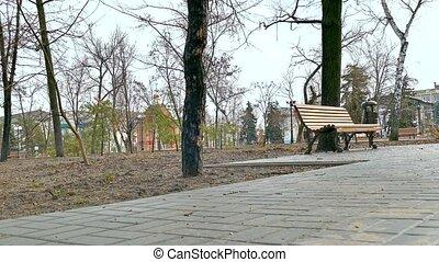 bench nature autumn landscape park path pavement