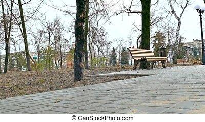 bench nature autumn park landscape path pavement - bench...