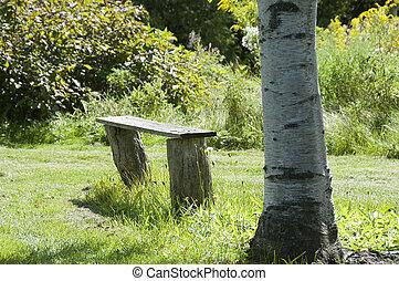 Bench of the birch