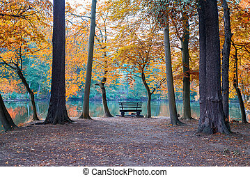 Bench on a autumn nature.