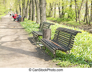 Bench on the footpath in the lush green garden