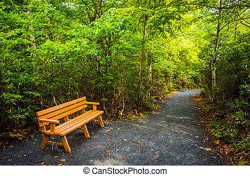 Bench on the Limberlost Trail, in Shenandoah National Park, Virginia.