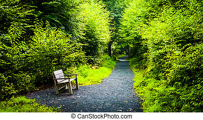 Bench on the Limberlost Trail, in Shenandoah National Park,...