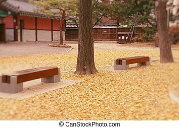 Bench park in korea