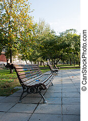 bench under a tree in the Park