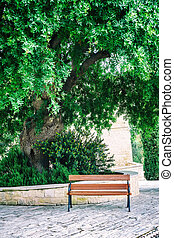 Bench under the Carob tree at the monastery near Pafos,...