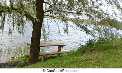bench willow tree lake