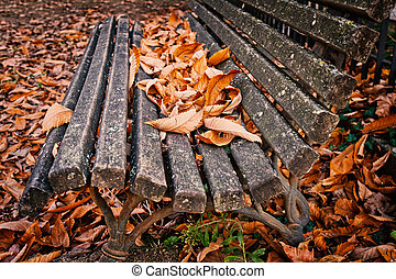 Bench with autumn of fall leaves