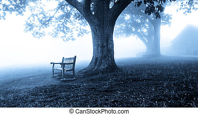 Benches and trees in fog, behind Dickey Ridge Visitor Center in Shenandoah National Park, Virginia.