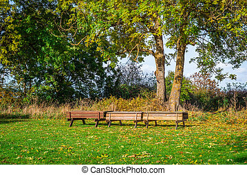 Benches in a park at autumn