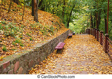 benches in the autumn park