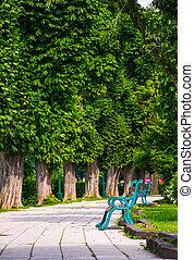 benches on Kiev embankment in Uzhgorod. lovely chestnut...