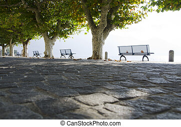 Benchs and a trees on the lakefront - Benchs and a trees on...