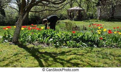 bend gardener work - Bend gardener woman weeding flower bed...