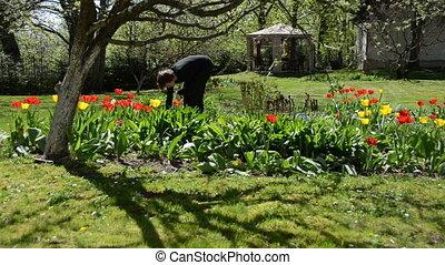 bend gardener work - Bend gardener woman weeding flower bed...