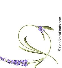 Bend single flower. Awesome lavender flower bend over white background. Vector illustration.