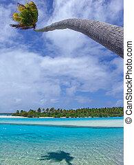 Bending Palm Tree