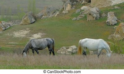 Bending their heads, horses eat grass on the field - Bending...