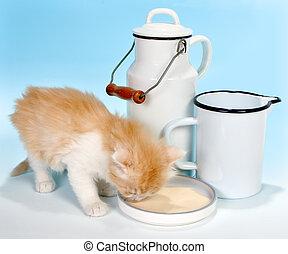 bendo latte
