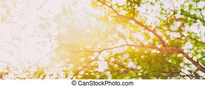 Beneath a tree panorama in the summer sun