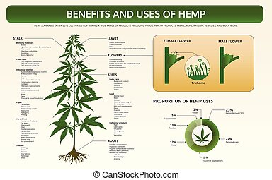 Benefits and Uses of Hemp horizontal textbook infographic