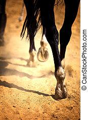 benen, paarde