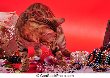 Bengal cat and Jewellery