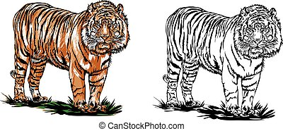 bengal tiger illustrations and clip art 2 266 bengal tiger royalty rh canstockphoto com white bengal tiger clipart Panda Clip Art