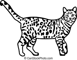 bengalen, leopard, kat
