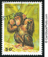 BENIN - CIRCA 1995: stamp printed by Benin, shows Pan troglodytes, circa 1995.