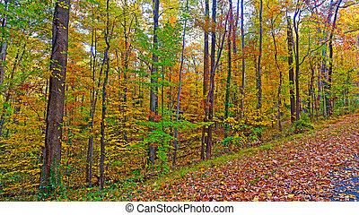 bennünket, nemzeti arboretum, alatt, a, bukás, washington, dc., út, keretezett, által, színes, ősz kilépő, alatt, a, sűrű, thicket.