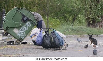 benne ordures, déchets, nourriture, regarder, personne, sdf, personne agee