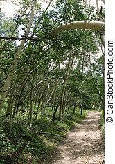 Bent Aspens Path