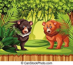 beren, in, de, jungle