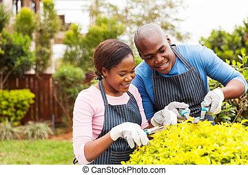 berendezés, kert, párosít, afrikai, otthon, fanyesés