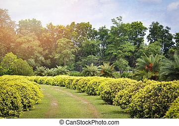 berendezés, pázsit, kert, természet, fa, liget, /, mező, zöld, cserje, tervezés, gyalogjáró, táj