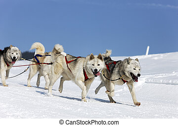 berg, alpin, rennen, winter, heiser