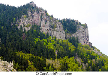 berg, Bäume