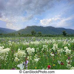 berg, blumen, landschaftsbild