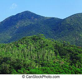 berg, grün, landschaftsbild, Bäume