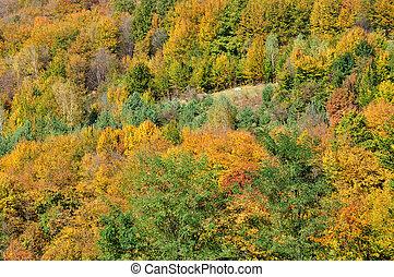 berg, herbstlandschaft, mit, bunte, wald