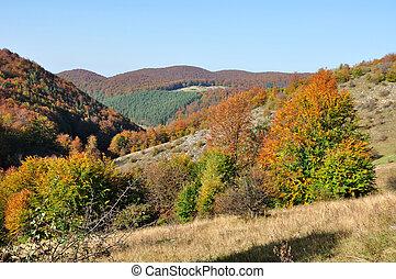 berg, herfst landschap, met, kleurrijke, bos